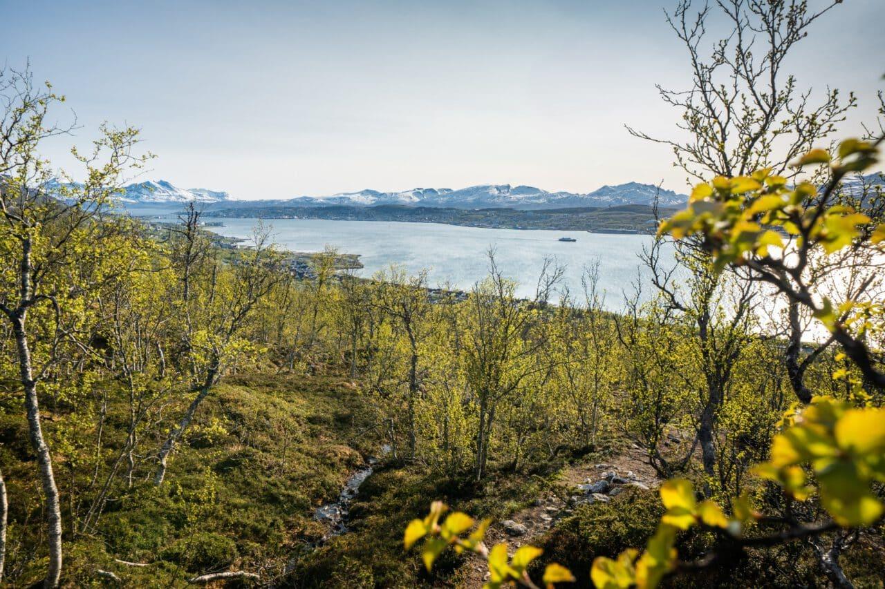 Skjelnan feltet i Tromsø